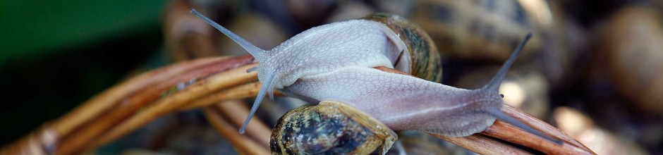 2 escargots enlacés